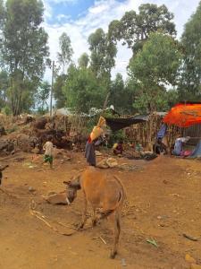 ÄthiopienNov2015 - 71 von 151